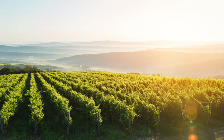 Hungarian Wine: Hope, Dreams, Heritage and Progress